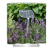 European Markets - Lavender Shower Curtain