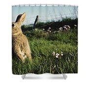 European Rabbit In A Meadow Shower Curtain