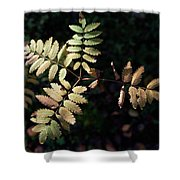 European Rowan Shower Curtain