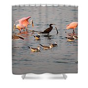 Evening Activity In The Bay Shower Curtain