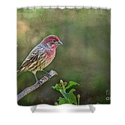 Evening Finch Blank Greeting Card Shower Curtain