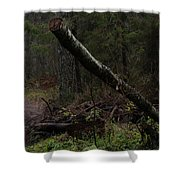 Evening In A Pine Forest Shower Curtain