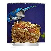 Evening Snack Shower Curtain