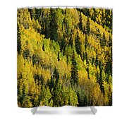 Evergreen And Quaking Aspen Trees Shower Curtain