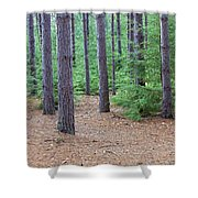Evergreen Forest Shower Curtain