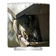 Evil Rodent Shower Curtain