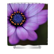 Eye Of The Daisy Shower Curtain