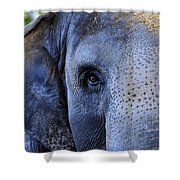 Eye Of The Elephant Shower Curtain