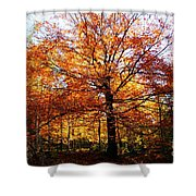 Eye Of The Forest Shower Curtain