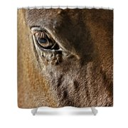 Eye Of The Horse Shower Curtain
