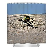 Eye To Eye With A Dragonfly Shower Curtain