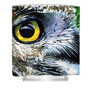 Eyes Of Owl's 19 Shower Curtain