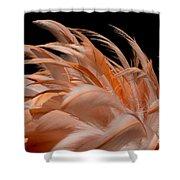 Fabulous Flamingo Feathers Shower Curtain