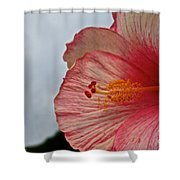 Facing Forward Shower Curtain