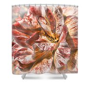 Faded Glory Shower Curtain