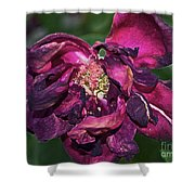 Fading Bloom Shower Curtain