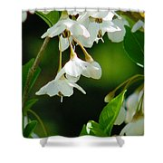 Faerie Bells 2 Shower Curtain