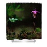 Fairy Slipper Orchid Calypso Bulbosa Shower Curtain