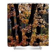Fall Beckons  Shower Curtain