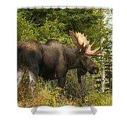 Fall Bull Moose Shower Curtain