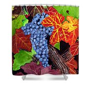 Fall Cabernet Sauvignon Grapes Shower Curtain by Mike Robles