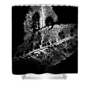 Fall Color In Black And White Shower Curtain