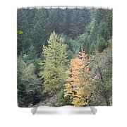Fall Color In The Trees Shower Curtain