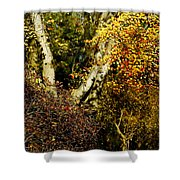 Fall Color Wall Art Landscape Shower Curtain