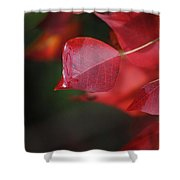 Fall Color Red Shower Curtain