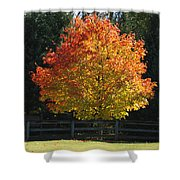 Fall Colored Tree Shower Curtain