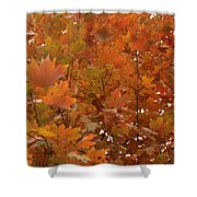 Fall Colors Shower Curtain