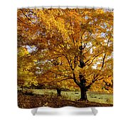 Fall Colours In Eastern Townships Shower Curtain