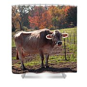 Fall Cow Shower Curtain