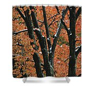 Fall Foliage Of Maple Trees After An Shower Curtain
