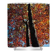 Fall From Above Shower Curtain
