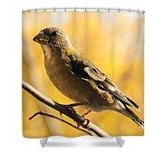 Fall Grosbeak Shower Curtain