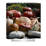 Fall Harvest Colorful Gourds 7965 Shower Curtain