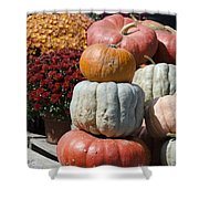 Fall Harvest Colorful Gourds 7968 Shower Curtain