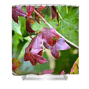Fall Has Begun Shower Curtain