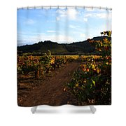 Fall In A Sonoma Vineyard Shower Curtain