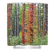 Fall Ivy On The Trees Shower Curtain