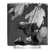 Fall Leaf Light Shower Curtain