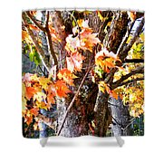 Fall Leaves 2 Shower Curtain