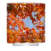 Fall Leaves Art Prints Autumn Red Orange Leaves Blue Sky Shower Curtain