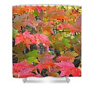 Fall Leaves Filtered Shower Curtain