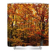 Fall Leaves On Trees Shower Curtain
