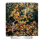 Fall Leaves Over Florida Pond Shower Curtain
