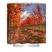 Fall Line Up Shower Curtain