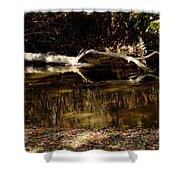 Fall Log Reflection Shower Curtain