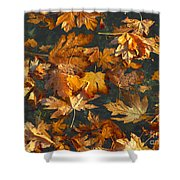 Fall Maple Leaves On Water Shower Curtain